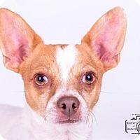 Adopt A Pet :: Rally - Colorado Springs, CO