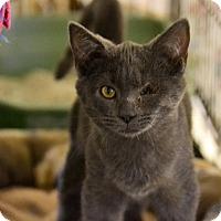 Adopt A Pet :: Sampson - Byron Center, MI
