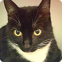 Adopt A Pet :: Dapper Dan - Sarasota, FL