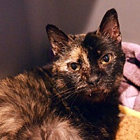 Adopt A Pet :: Tootsie - Lincoln, NE
