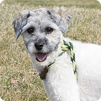 Adopt A Pet :: Harrison - CP (HPR) - APPLICATIONS CLOSED - Livonia, MI