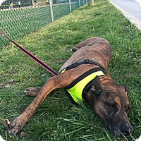 Adopt A Pet :: Buddy - Essington, PA