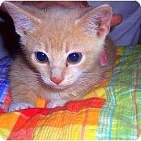 Adopt A Pet :: Beta - Alexandria, VA