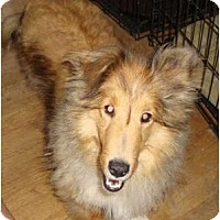 Adopt A Pet :: Sandie is a sweetheart! - Leesport, PA