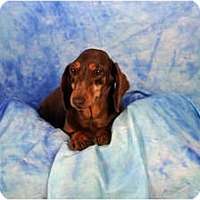 Adopt A Pet :: Kelly - Ft. Myers, FL