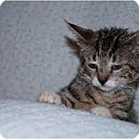 Adopt A Pet :: Paws - New Egypt, NJ
