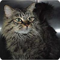 Adopt A Pet :: Brownie - Lunenburg, MA