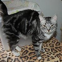 Adopt A Pet :: Dharma - Brainardsville, NY