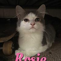 Adopt A Pet :: Rosie - Cheney, KS