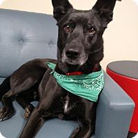 Adopt A Pet :: King - Grand Rapids, MI