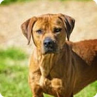Adopt A Pet :: Richard 0007 - Columbus, GA