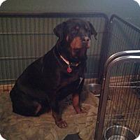 Adopt A Pet :: Mara - mooresville, IN