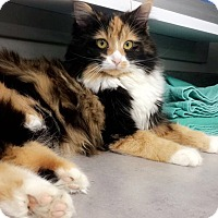 Adopt A Pet :: Harriet - Germantown, OH