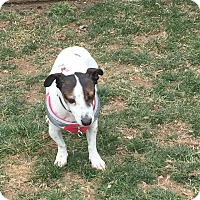 Adopt A Pet :: Gracie (Snoopy) - Blue Bell, PA