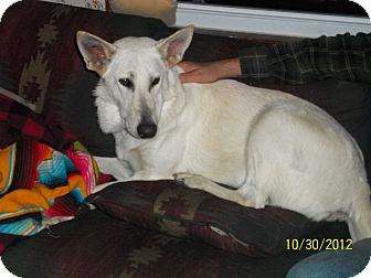 German Shepherd Dog Dog for adoption in Greeneville, Tennessee - Snow