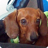 Adopt A Pet :: Colonel - Toronto, ON