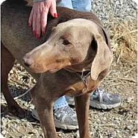 Adopt A Pet :: Stella--adopted!! - New Richmond, OH