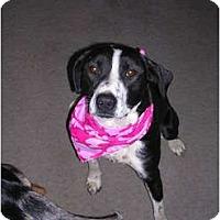 Adopt A Pet :: Rosieta - Glastonbury, CT