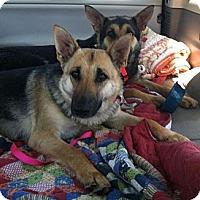 Adopt A Pet :: Natasha - Pike Road, AL
