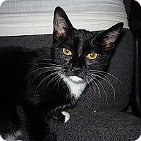 Adopt A Pet :: Mitzie - Salem, OR