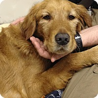 Adopt A Pet :: Max - Courtesy Posting - New Canaan, CT