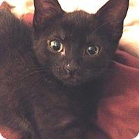 Adopt A Pet :: Liddy - North Highlands, CA