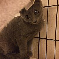Adopt A Pet :: Deja - Sunny Isles Beach, FL