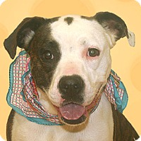 Adopt A Pet :: Karma - Cincinnati, OH