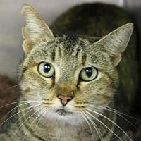 Adopt A Pet :: Catori - Hilton Head, SC