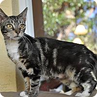 Adopt A Pet :: Msty! OMG! LOVE HER! (NSB) - New Smyrna Beach, FL