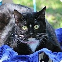 Adopt A Pet :: Raven - Ocean Springs, MS