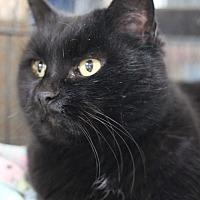 Adopt A Pet :: Kaitlin - Carlisle, PA