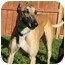 "Photo 4 - Greyhound Dog for adoption in Smyrna, Tennessee - WTD On My Way ""Way'"