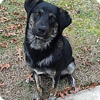 Adopt A Pet :: Bronson  URGENT REDUCED - Kittery, ME