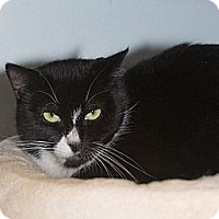 Adopt A Pet :: Bebe - Elmwood Park, NJ