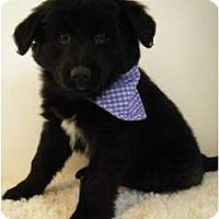 Adopt A Pet :: Jemma - Rigaud, QC