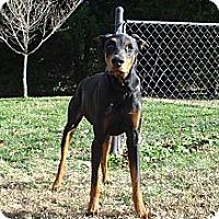 Adopt A Pet :: JESSIE - ROCKMART, GA