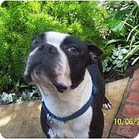 Adopt A Pet :: Bruiser - Temecula, CA