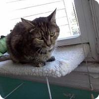 Adopt A Pet :: Frances - bloomfield, NJ