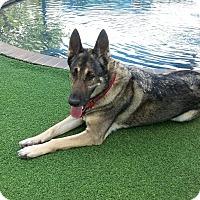 Adopt A Pet :: Princess - Pompano Beach, FL