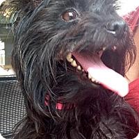 Adopt A Pet :: McKenzie - Hixson, TN