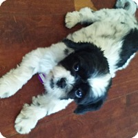 Adopt A Pet :: Danni - Woodland, CA