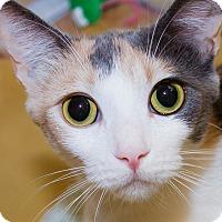 Adopt A Pet :: Cale - Irvine, CA