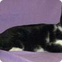 Adopt A Pet :: Oscar - Powell, OH