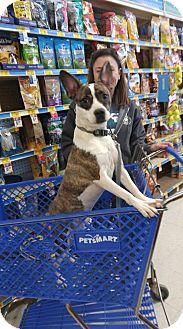 Miniature Pinscher Mix Dog for adoption in Princeton, Minnesota - Hustle