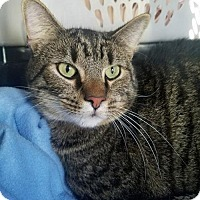 Adopt A Pet :: Jax - PETSEN$E - Knoxville, TN