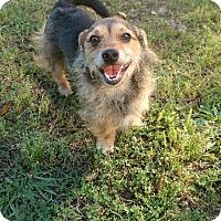 Adopt A Pet :: Benji - Gainesville, GA
