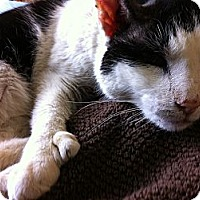 Adopt A Pet :: Parker Posey - Bedford, MA