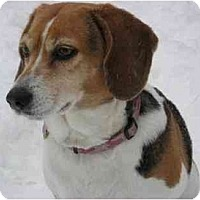 Adopt A Pet :: Mollie - Rigaud, QC