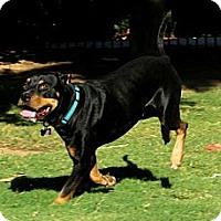 Adopt A Pet :: MIDNIGHT - Phoenix, AZ